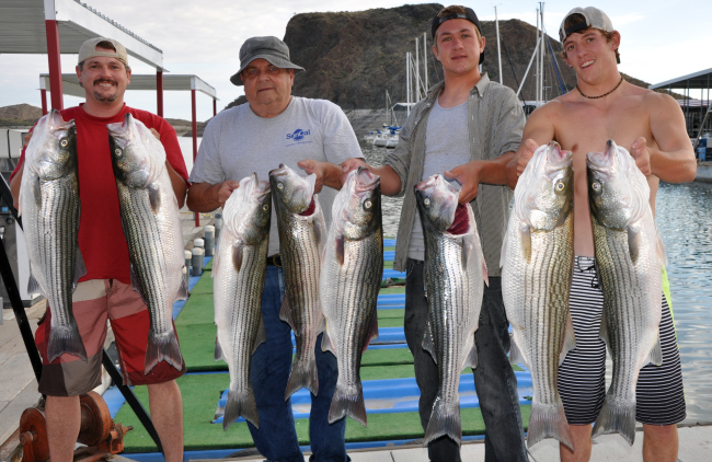 Striper Anyone??...  Here you go!